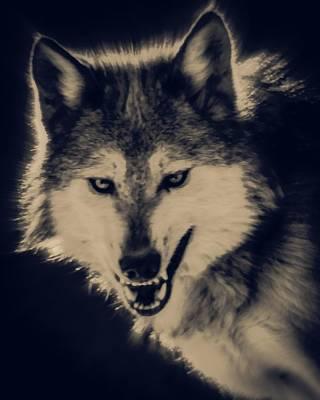 Canines Digital Art - Evil Wolf by Ernie Echols