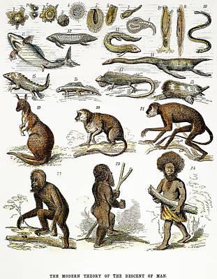 Evolution Chart Art Print by Granger