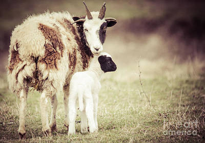 Edward Hopper - Ewe and Young by Cheryl Baxter