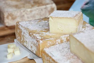 Ewes Milk Cheese Art Print by Ashley Cooper