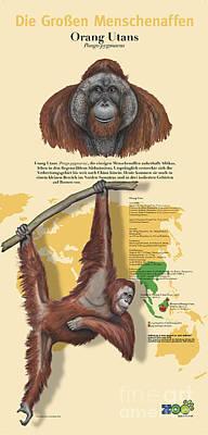 Orangutan Painting - Text Example Orang-utan Orangutan Pongo Pygmaeus Zoo Panel Great Apes  by Urft Valley Art