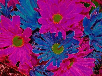 Photograph - Excited Daisies by J R Seymour