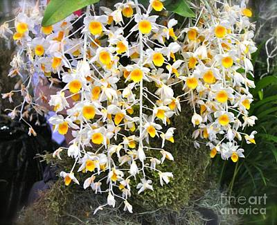 Photograph - Exotic Aerides by The Art of Alice Terrill