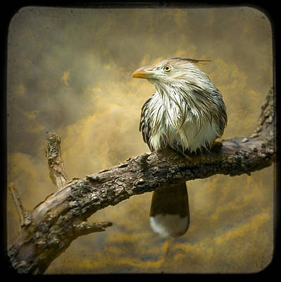 Art Print featuring the photograph Exotic Bird - Guira Cuckoo Bird by Gary Heller