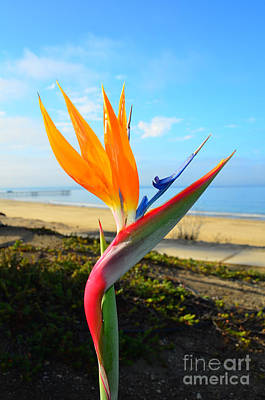 Photograph - Exotic Bird Of Paradise by Debra Thompson