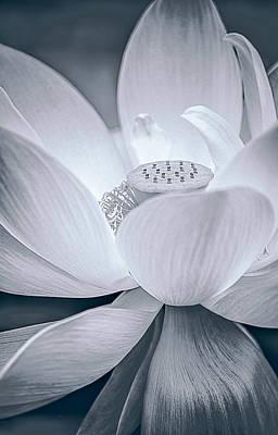 Zen Digital Art - Exotic Bloom In White by Julie Palencia