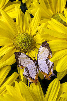 Exotic Butterfly Art Print by Garry Gay