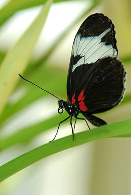 Photograph - Exotic Butterfly by Tam Ryan