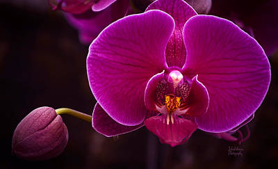 Photograph - Exotic Fuschia  by Julie Palencia