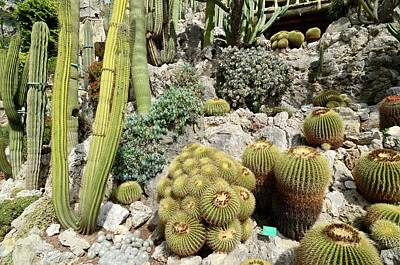 Monaco Photograph - Exotic Garden by Chris Hellier