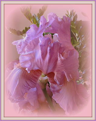 Photograph - Exotic Iris by Kay Novy