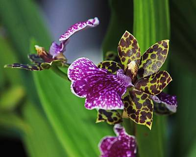Photograph - Exotic Orchid 3 by Michael Saunders