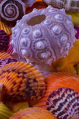Exotic Sea Shells Art Print