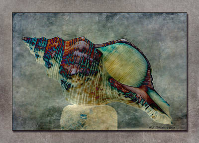 Exotishell 2 Art Print