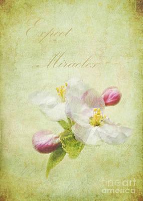 Expect Miracles Art Print by Kathi Mirto