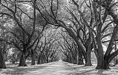Evergreen Plantation Photograph - Exploring Louisiana - Oil Paint Bw by Steve Harrington