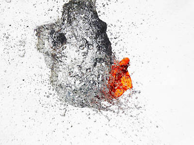 Explosive Water Balloon Art Print by Jay Harrison