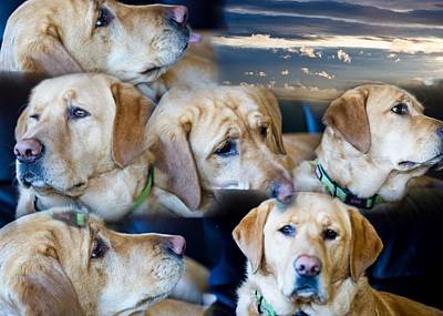Photograph - Expressions Of Ms Bailey - Dog - Golden Lab by Marie Jamieson