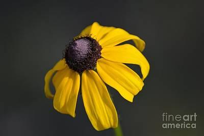 Scifi Portrait Collection - Exquisite Yellow Flower Petals by Patricia Twardzik