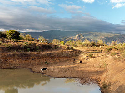 Semi Dry Photograph - Extensive Cow Farming With Water Hole by Daniel Sambraus