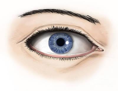 External Anatomy Of The Human Eye Art Print