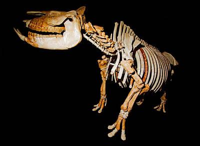 Photograph - Extinct Rhinoceros by Millard H. Sharp