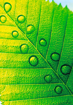 Extreme Close Up Of Leaf Vein Art Print by Panoramic Images