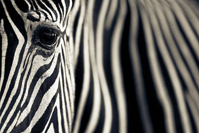Close Up Photograph - Eye & Stripes by Mario Moreno