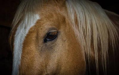 Working Cowboy Photograph - Eye For An Eye by Doug Long