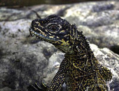 Photograph - Eye Of A Lizard by Steven Parker