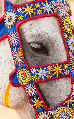 Photograph - Eye Of Horse  by Rick Piper Photography