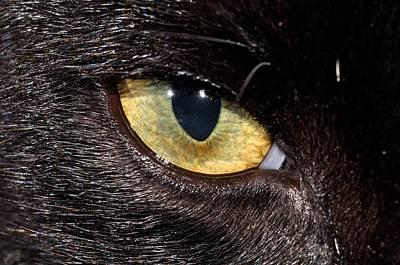Photograph - Eye Of Obsidian by Rich Rauenzahn