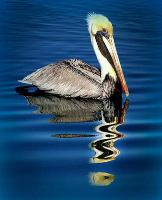 Pelican Wall Art - Photograph - Eye Of Reflection by Karen Wiles
