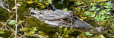 Photograph - Eye Of The Alligator by Ed Gleichman