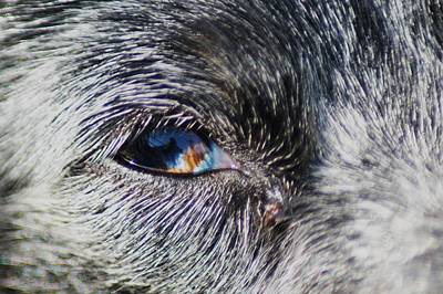 Photograph - Eye Of The Beholder by Angi Parks