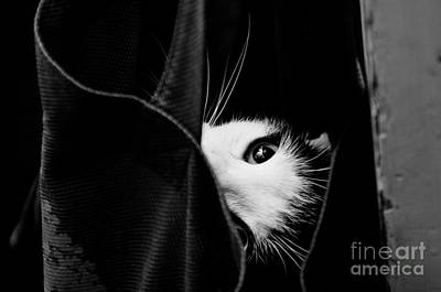 Photograph - Eye Of The Cat by Cheryl Baxter