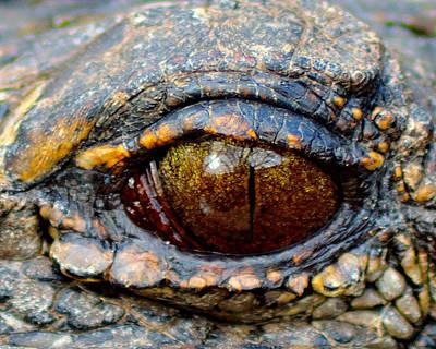 Photograph - Eye Of The Dragon by Shannon Harrington