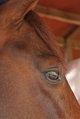 Photograph - Eye Of The Dreamer - Purebred Pony by Gill Billington