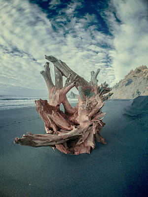 Photograph - Eye Of The Driftwood by Greg Nyquist