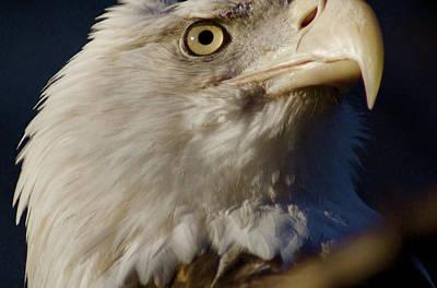 Photograph - Eye Of The Eagle by Greg Vizzi