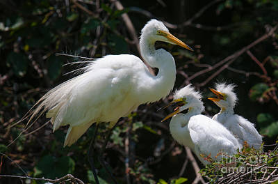 Anchor Down - Eye of the Egret by Dale Powell
