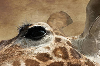 Photograph - Eye Of The Giraffe by Terri Waters