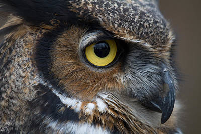 Craig Brown Photograph - Eye Of The Owl by Craig Brown
