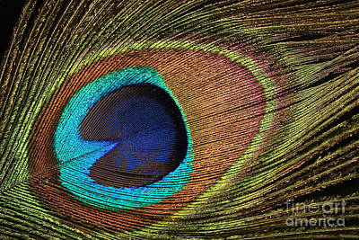 Eye Of The Peacock Art Print by Judy Whitton