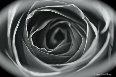 Photograph - Eye Of The Rose by Michaela Preston