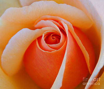 Eye Of The Rose Art Print by Nick  Boren