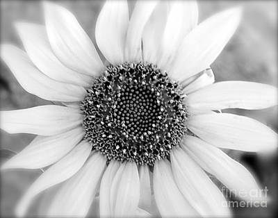 Photograph - Eye Of The Sunflower by Suzanne Oesterling