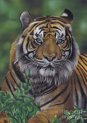 Pastel - Eye Of The Tiger by Karie-Ann Cooper