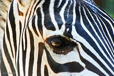 Eye Of The Zebra Art Print