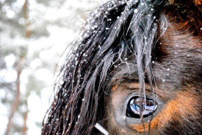 Photograph - Eye On Snow by Emily Stauring